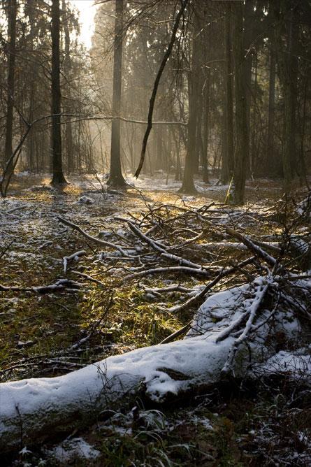 Fotografia przyrody Szeroki Kadr